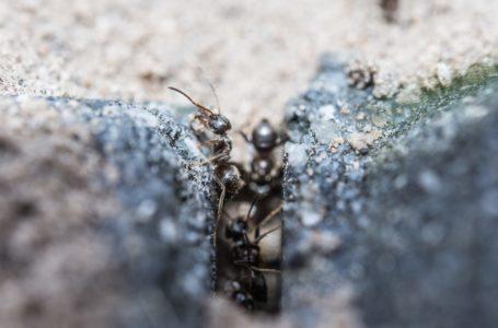 Mrówki w domu – skąd się biorą, jak się ich pozbyć?