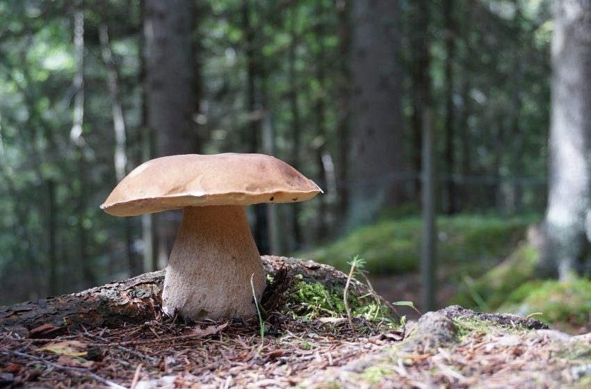 Grzyby w ogrodzie - czy uprawa jadalnych grzybów w ogrodzie jest możliwa?