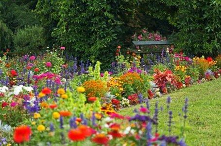 Rabaty kwiatowe – jak je komponować, żeby pięknie wyglądały przez cały rok