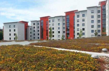 Zielony dach bez tajemnic