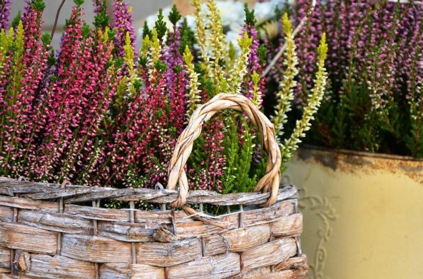 jakie kwiaty kwitnące jesienią nadają się do ozdobienia balkonu