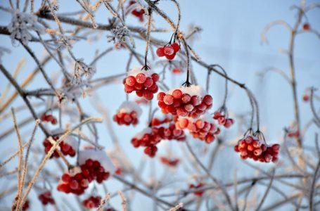 Piękny ogród w zimie – sprawdź, jakie rośliny kwitną o tej porze roku!