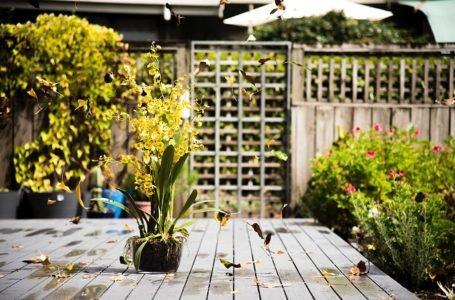 Co powinno się znaleźć w praktycznym i pięknym ogrodzie?