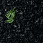 Jak wybrać najlepszy ekogroszek?