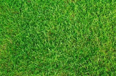 Jak zadbać o trawnik?