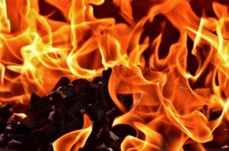 Ekogroszek workowany – ciepło i organizacja