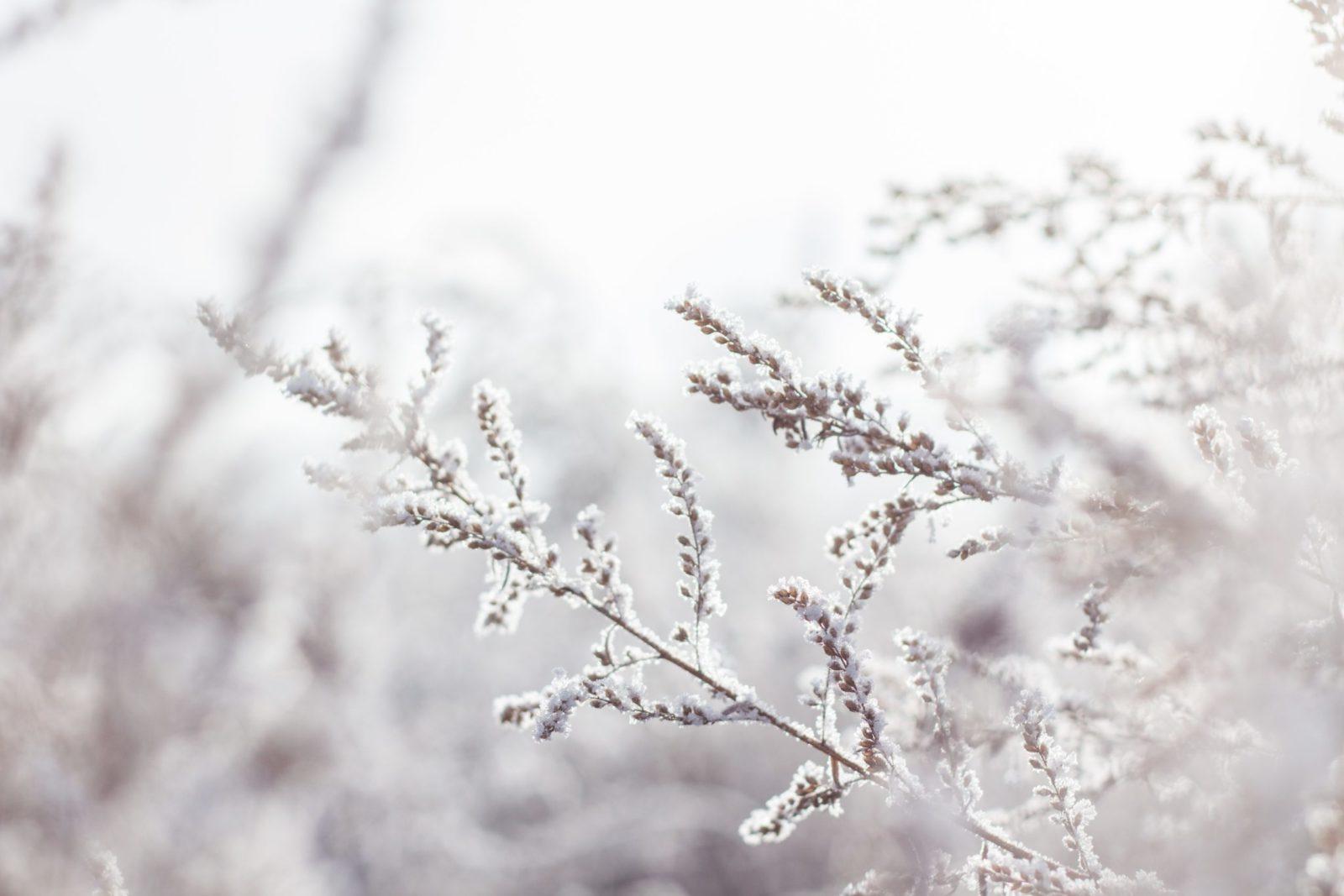 Pogoda dla rolników, czyli zimowe prognozy