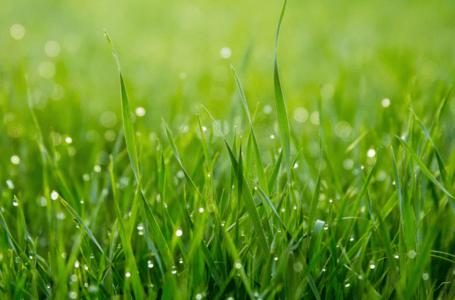Zalety zakładania trawnika na wiosnę